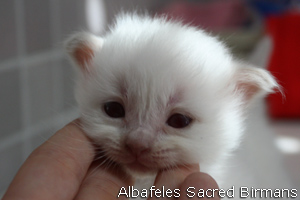 pictures of kittens